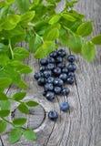 Fresh bilberry Stock Photography