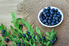 Fresh bilberry on wooden background. Stock Photography
