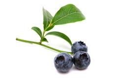 Fresh bio bilberries. On white background Royalty Free Stock Photography