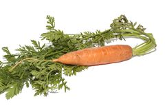 Fresh bio carrot Royalty Free Stock Photos