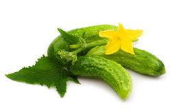 Fresh bio cucumber Royalty Free Stock Image