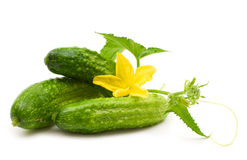 Fresh bio cucumber Stock Image