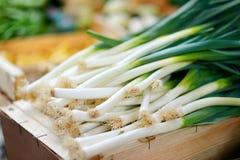 Fresh bio leek on farmer agricultural market Stock Photos