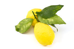 Fresh bio lemon Stock Photography