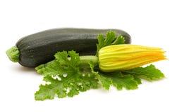 Fresh bio marrow Stock Image