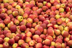Fresh and bio red apple close up at the market place stock images
