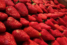 Fresh bio strawberries Stock Image