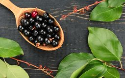 Bird cherry in spoon Royalty Free Stock Image