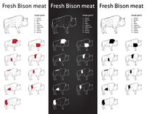 Fresh Bison meat cuts set Stock Images