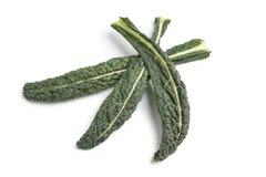 Fresh black cabbage leaves Royalty Free Stock Image