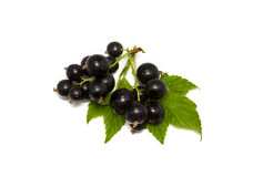Fresh black currant Royalty Free Stock Photo