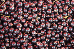 Fresh black currant Background Stock Photos