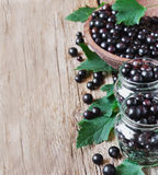 Fresh black currant Royalty Free Stock Image