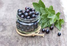Fresh black currant in the glass, on rustic wooden board. Stock Images