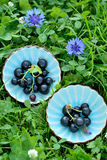 Fresh black currant royalty free stock images