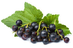 Fresh black currant isolated Royalty Free Stock Photo