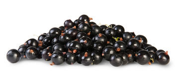 Fresh Black Currant Stock Photography