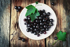 Fresh black currant Royalty Free Stock Photography