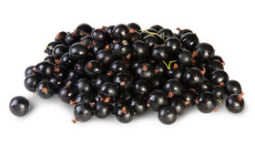 Fresh Black Currant Rotated Royalty Free Stock Photos