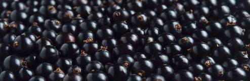 Fresh black currant, texture. Ripe fresh black currant, texture, berry background stock photos