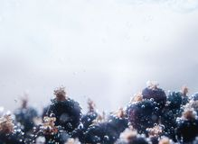 Fresh black current in water wiht air bubbles. Close-up photo Royalty Free Stock Photos