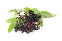 Fresh black elder berries Stock Photos