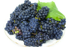 Fresh black grape Stock Images