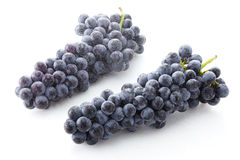 Fresh black grapes Stock Image