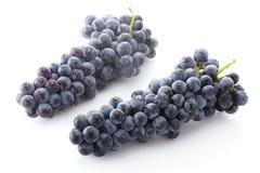 Fresh black grapes. Shot in studio Stock Image