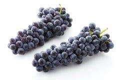 Fresh black grapes. Shot in studio Stock Images