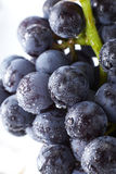 Fresh black grapes. Shot in studio Royalty Free Stock Photos