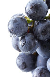 Fresh black grapes Stock Photo