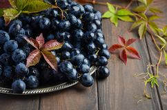 Fresh Black Grapes on Silver Plate Royalty Free Stock Photo