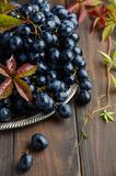 Fresh Black Grapes on Silver Plate Royalty Free Stock Photos