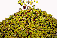 Fresh black and green olives Stock Photo