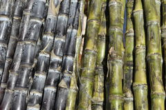 Fresh Black and Green Sugar Canes Royalty Free Stock Photography
