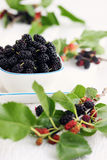 Fresh black mulberries Royalty Free Stock Image