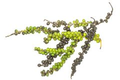 Raw Fresh green and black pepper isolated on white royalty free stock photography