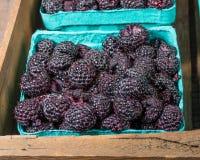Fresh black raspberries in boxes. Fresh picked black raspberries on display at the market Royalty Free Stock Image