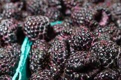 Fresh black raspberries in boxes. Fresh picked black raspberries on display at the market Stock Photo