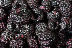 Fresh black raspberries in boxes. Fresh picked black raspberries on display at the market Stock Photos