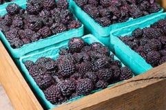 Fresh black raspberries in boxes. Fresh picked black raspberries on display at the market Stock Image