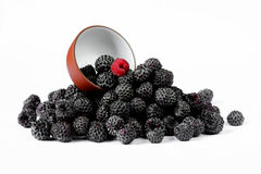 Fresh black raspberries Cumberland isolated on white Stock Photos