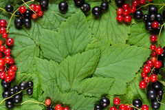 Fresh black and red berries on the green leaves like a frame Royalty Free Stock Photos
