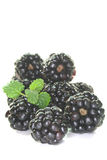 Fresh blackberries Stock Photography