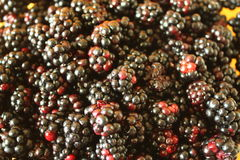 Fresh blackberries Royalty Free Stock Photos