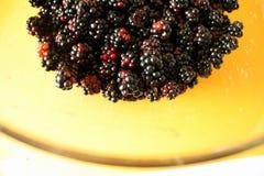 Fresh blackberries Stock Photos