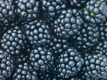 Fresh Blackberries Royalty Free Stock Image
