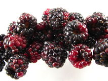 Fresh Blackberries Royalty Free Stock Photo