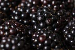 Fresh blackberries background Stock Photography